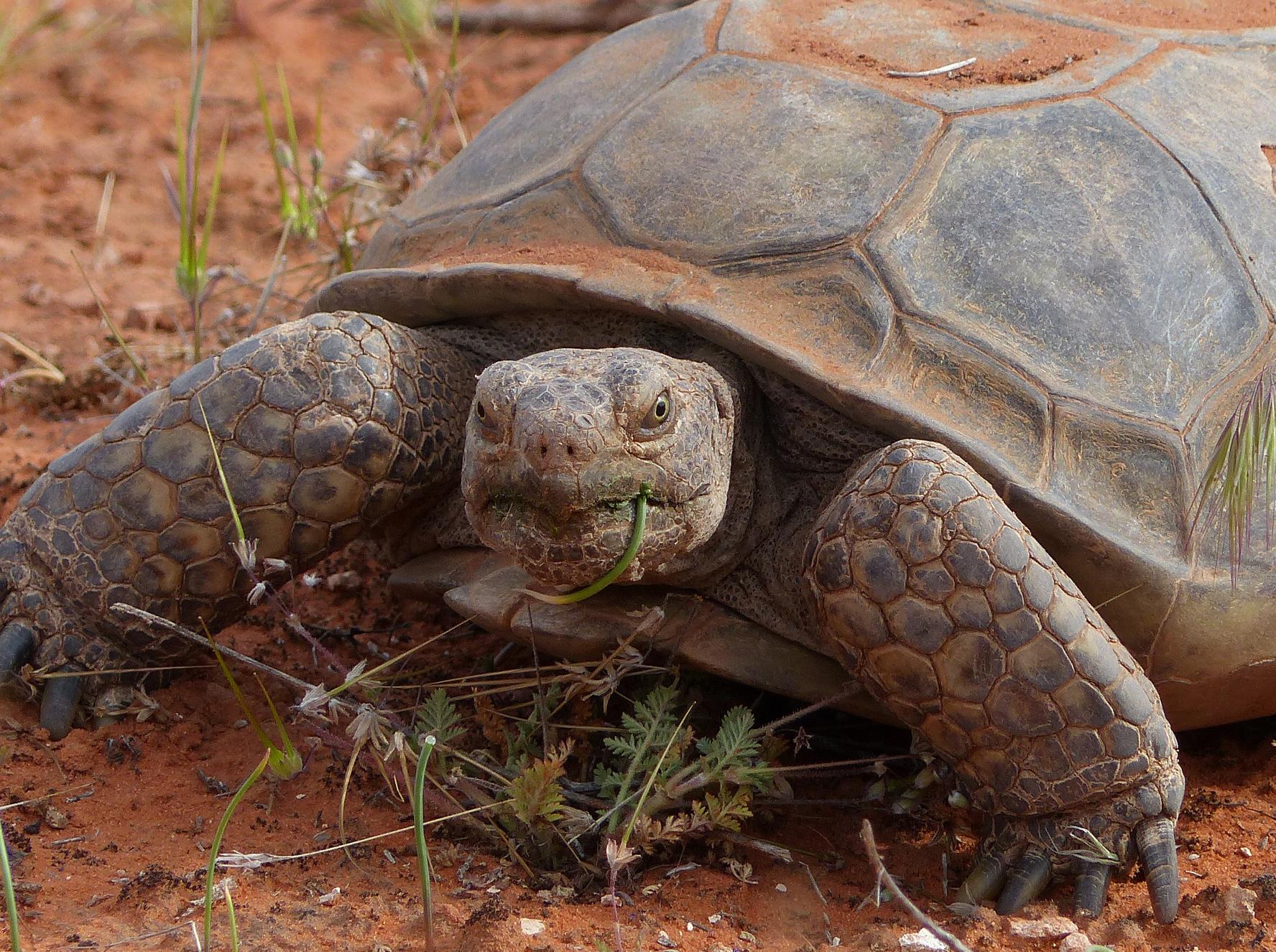 Urgent! Save the Desert National Wildlife Refuge! — AddUp.org