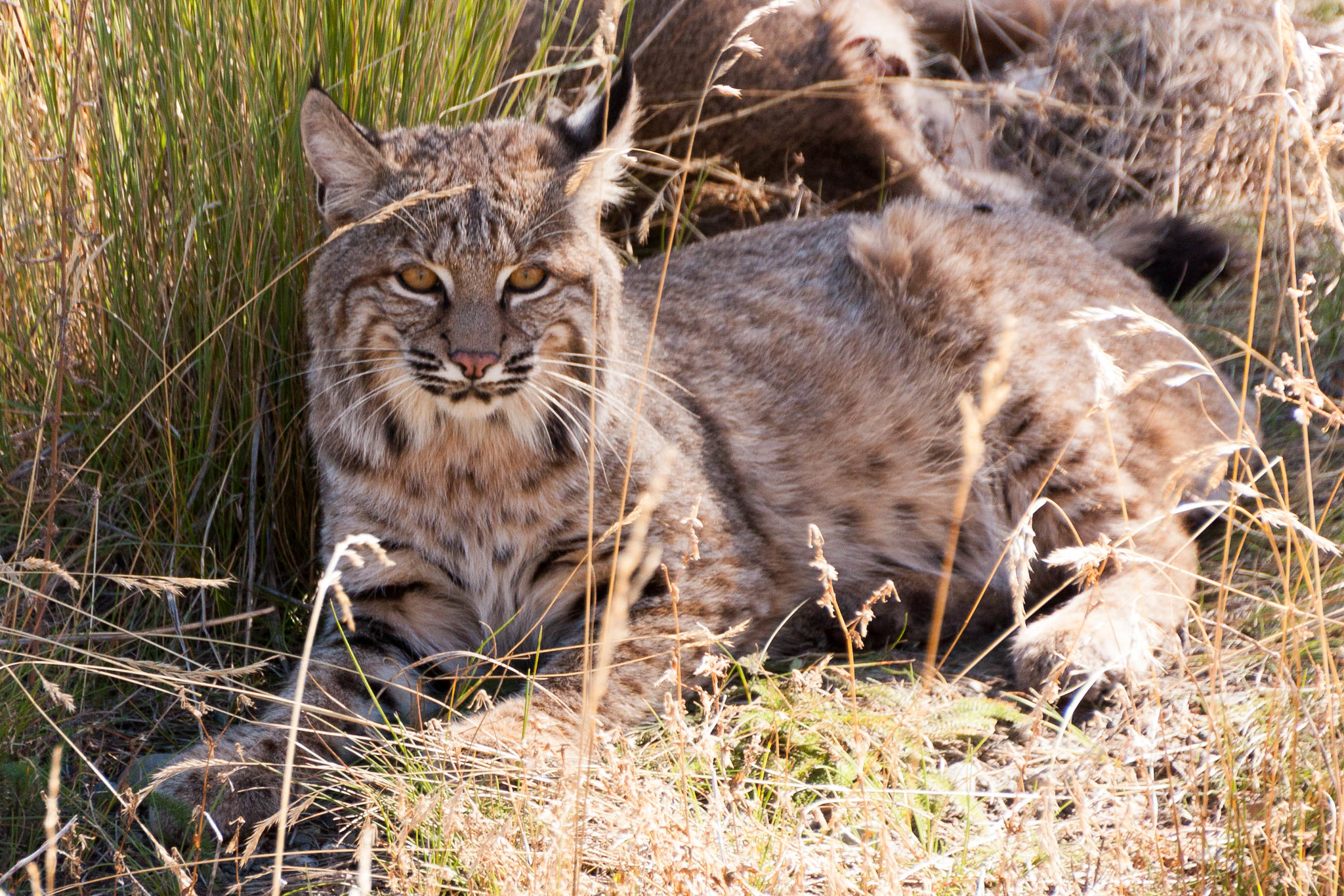 Help Stop Wildlife Killing Contests in Arizona — AddUp.org