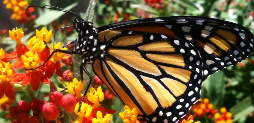 Tell Ace Hardware: Stop Selling Bee and Butterfly-Killing Pesticides! — AddUp.org